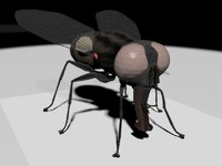 3d model house fly