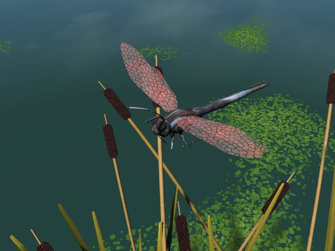 dragonfly 3d 3ds