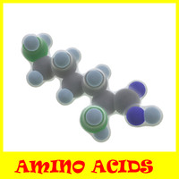 proteinogenic amino acids 3d model