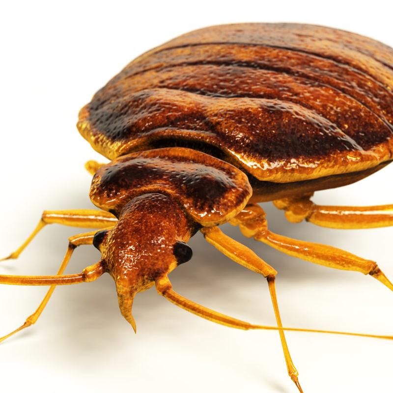 maya bedbug quads lightwave