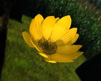3ds max opened flower