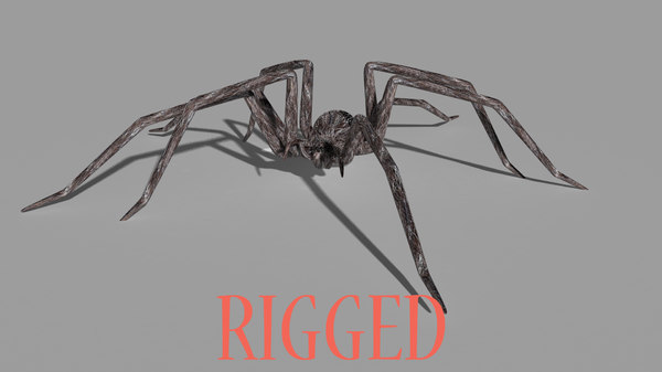 ma rigged spider