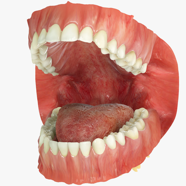realistic teeth gums tongue max