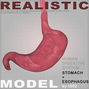 3d model stomach medical digestive