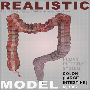 3ds max colon large intestine