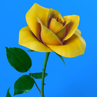 3d model rose flower