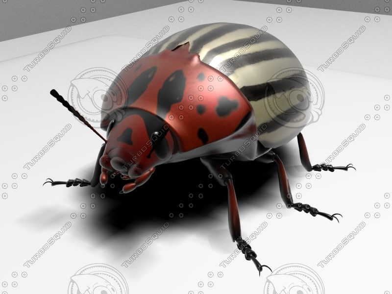 3ds max colorado potato beetle
