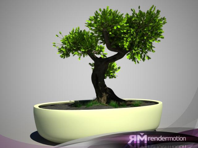 d2 c1 10 bonsai tree 3d max