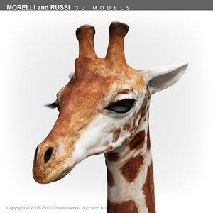 giraffe c4d
