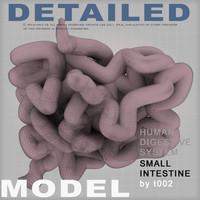 small intestine digestive 3d 3ds