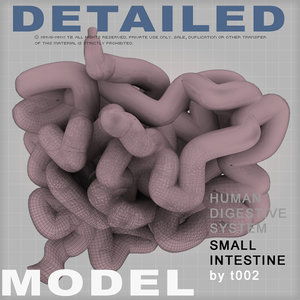 small intestine digestive 3d 3ds