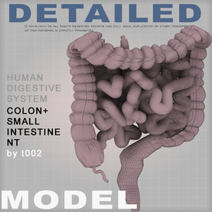 colon large intestine small 3d max