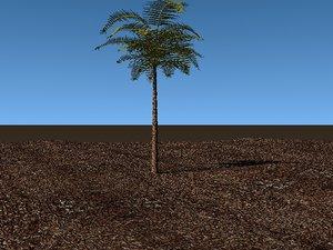 lwo palm tree