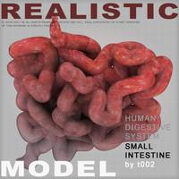 3d model small intestine digestive