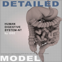 Human Digestive System-NT