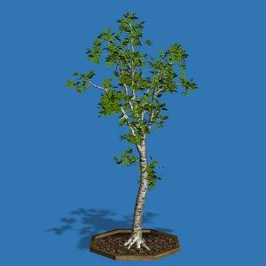 3ds silver birch tree pl