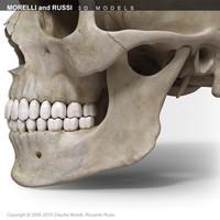 morelli russi skull 3d obj