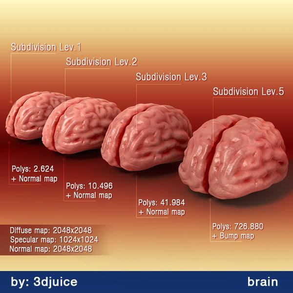 max human brain