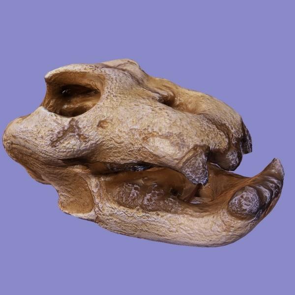 Reptile Skull 3d Model