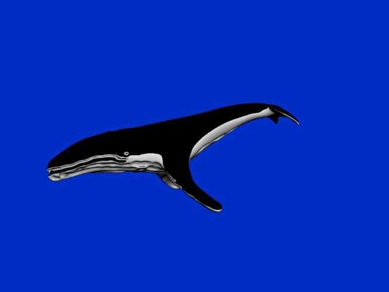 humpback whale max free