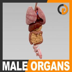 human internal organs - 3d model