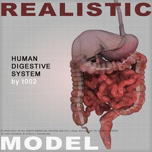 human digestive 3d model