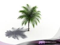D2.C1.24 Yatay Palm, Palmera Tatay