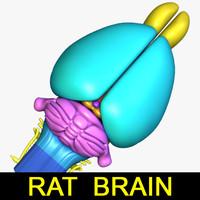 max rat brain