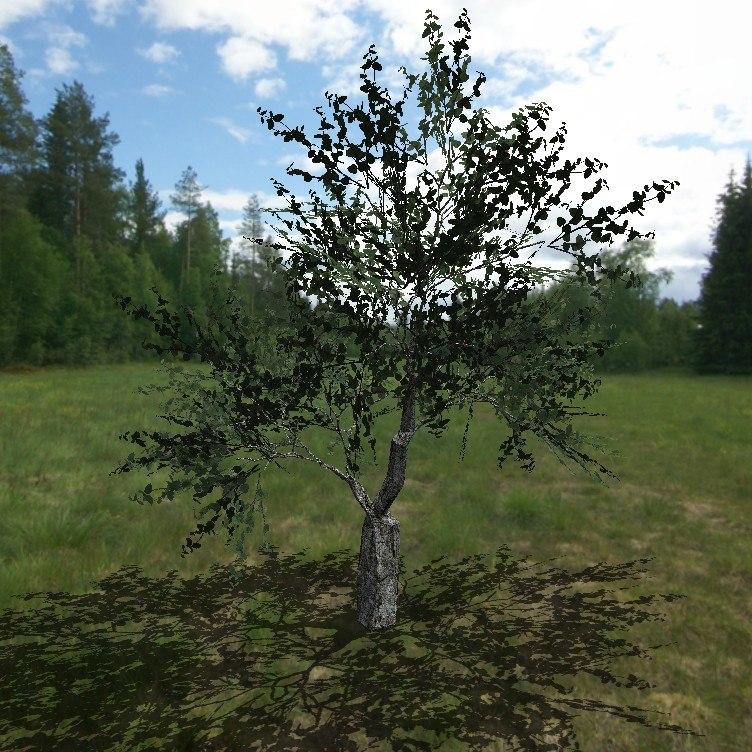 3d birch