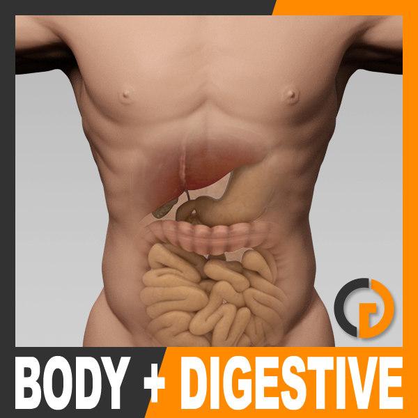 maya human male body digestive
