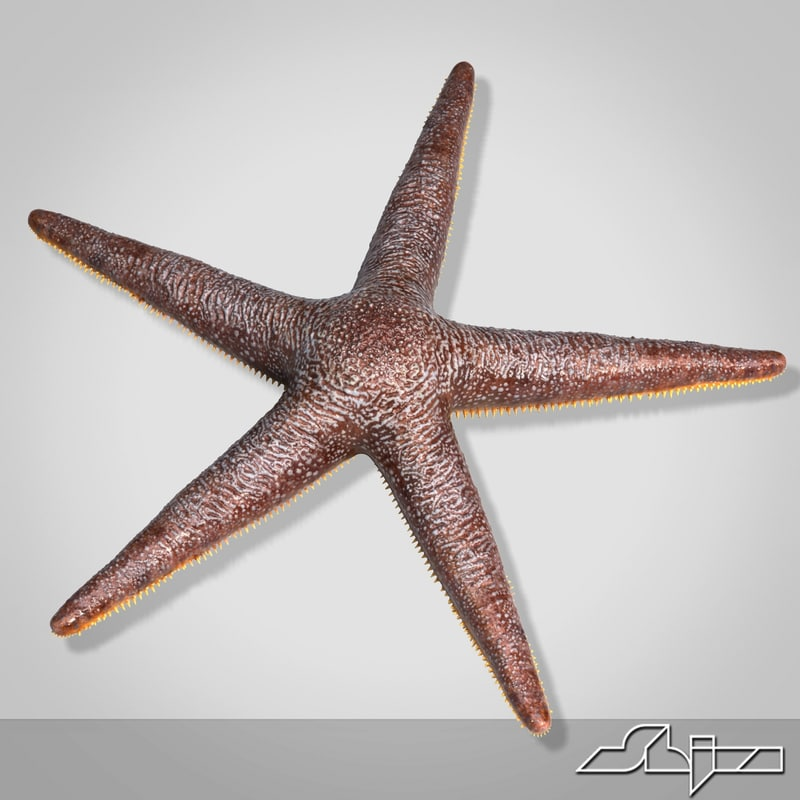 3d model starfish star