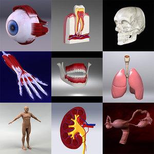 3d model human organ set
