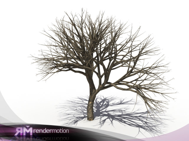 3d model d2 c1 05 dead tree