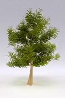 acacia tree 3ds