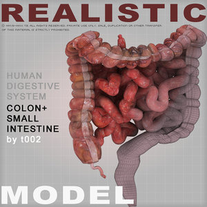 maya colon large intestine small