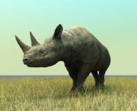 rhino ma