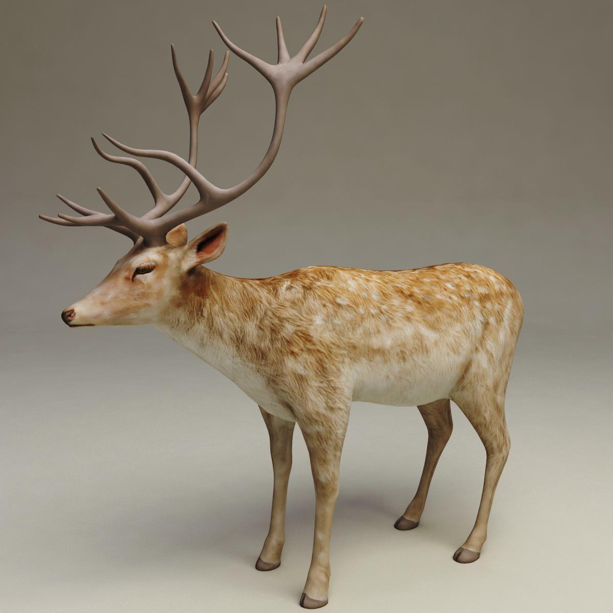 deer v2 3d model