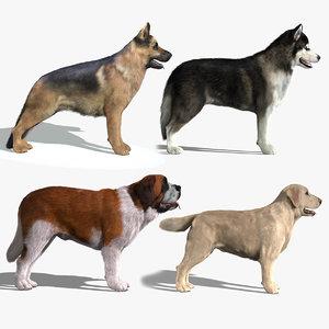 dogs fur 3d model