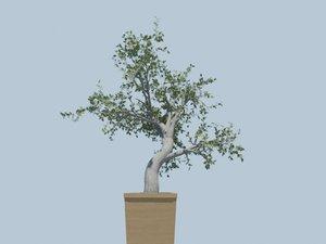 big tree bark 3d max