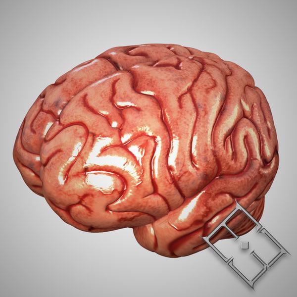 human brain obj