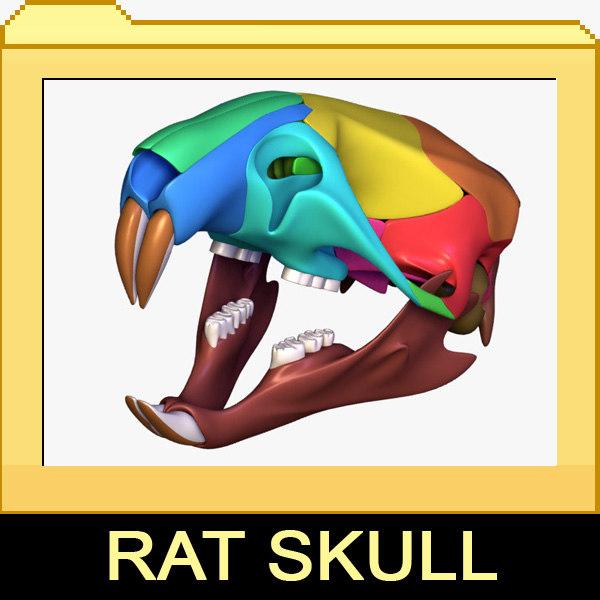 rat skull separated bones anatomy 3d max