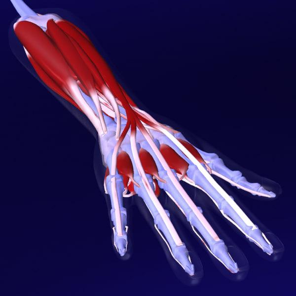 max correct arm