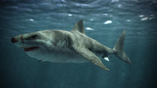 obj great white shark