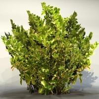 3d pc bush
