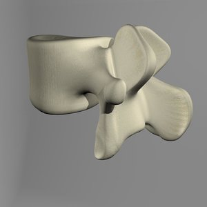 3d lumbar vertebrae model