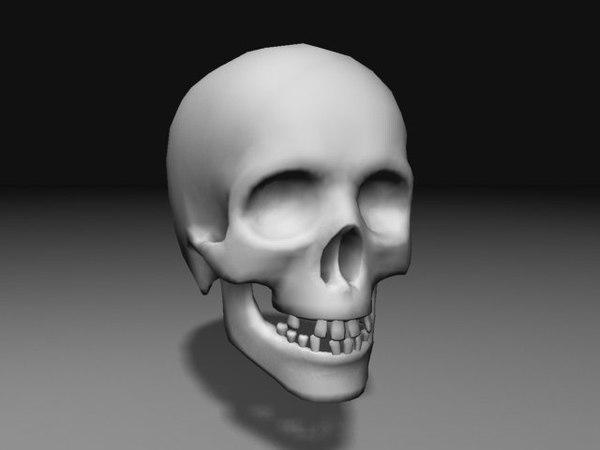 3d model nextgen skull