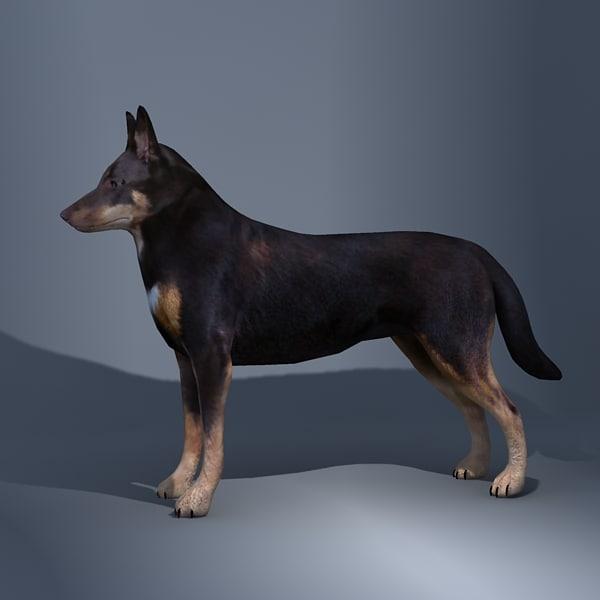 australian sheperd dog 3d 3ds