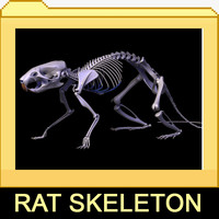 3d rat skeleton separated bones model