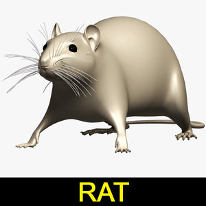 3d model rat