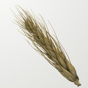 3d model wheat spike -